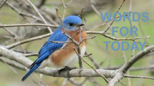 bluebird-adapted