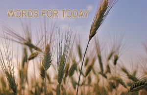 wheat field-adapted